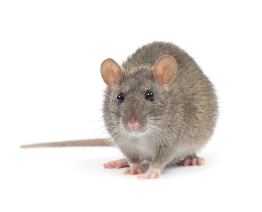 Rodents and Pests